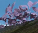 Дикая горная Дага
