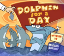 Dolphin for a Day