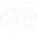 Golby Face!/Gigantillus