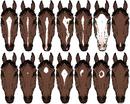 Horsemarkings-1-.png