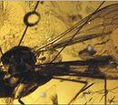 Elephantomyia irinae