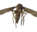 Man-eating insect (adult)