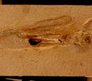Кальмары