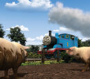 Thomas and the Pigs