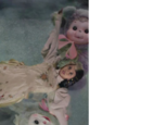 Rushton Dolls