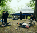 Massacre at Central Park