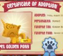 Pet Golden Pony