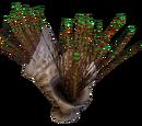 Spiked Horn Grass