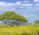 Mirihi Forest