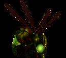 Xaxx Bee