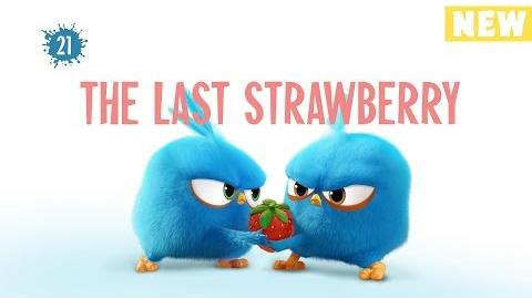 Angry Birds Blues The Last Strawberry - S1 Ep21 NEW
