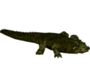 Alligator prenasalis