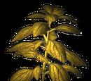 Erva Amarela