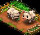 Pietrain Pig Coop