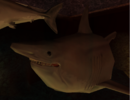 Fat Shark.png