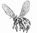 Coco Milk Bee