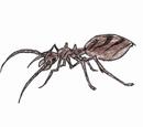 Dead Ash Ant