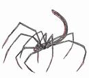 Eaglefire Spider