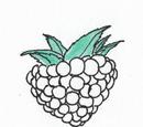 Mint Grapes