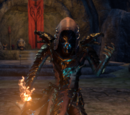 Online: Drachenpriester