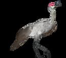 Sandhill Crane (Burnt Gecko)