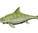 Офтальмозавр