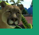 Costa Rican Cougar