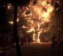 Árvore de Carvalho Branco