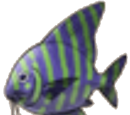 Held Items: Fish