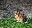Der gefönte Hase