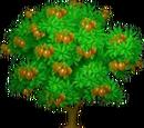 African Shea Tree