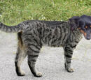 Bilder von Kreuzung zwischen Hund und Katze