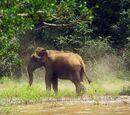 Bilder von Der Safaripark