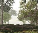 Lago de la Niebla