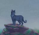 MysticalClouds/Thunderclan (Rabbitprincess5)