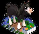 Black Irish Horse