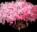 Bamboo Blossom