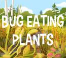 Bug Eating Plants!