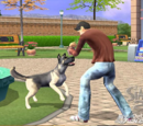 The Sims 2: Pets (console)