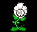 Time Daisy
