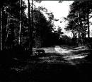 Темнолесье
