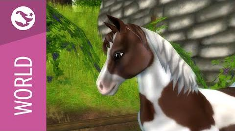 Star Stable World - Chincoteague Pony