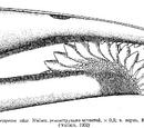 Рыбы пермского периода
