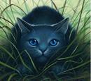 Easylistening/Warriors Novel Series Wiki - Editors Needed