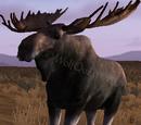 Moose (2.7)