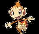 Chimchar (Pokémon Series)
