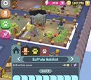 Species: Buffalo