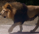 Zombie Lion (Zoombies)