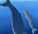 Baleia de Megalokk