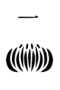 1st Division Insignia.png